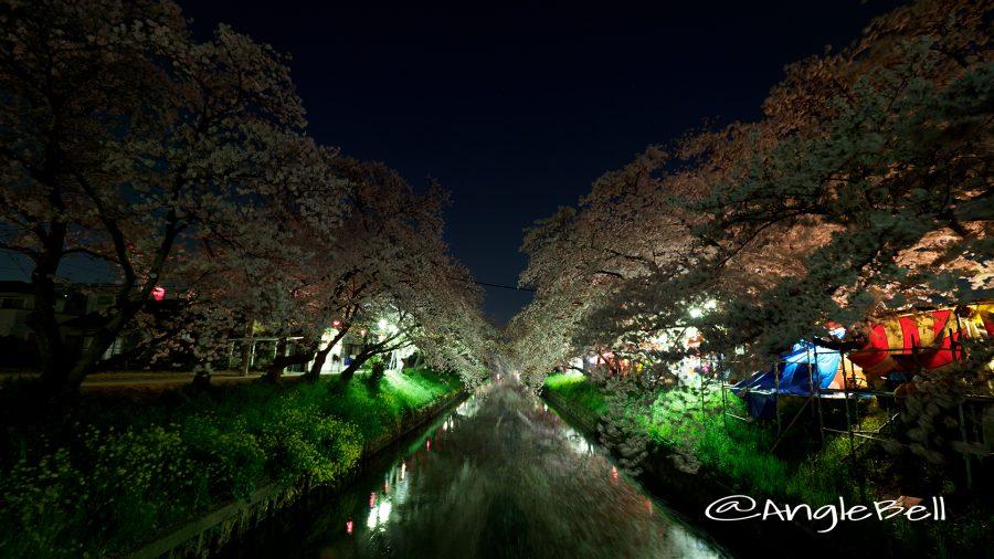 愛知県岩倉市 五条川の桜並木 ライトアップ