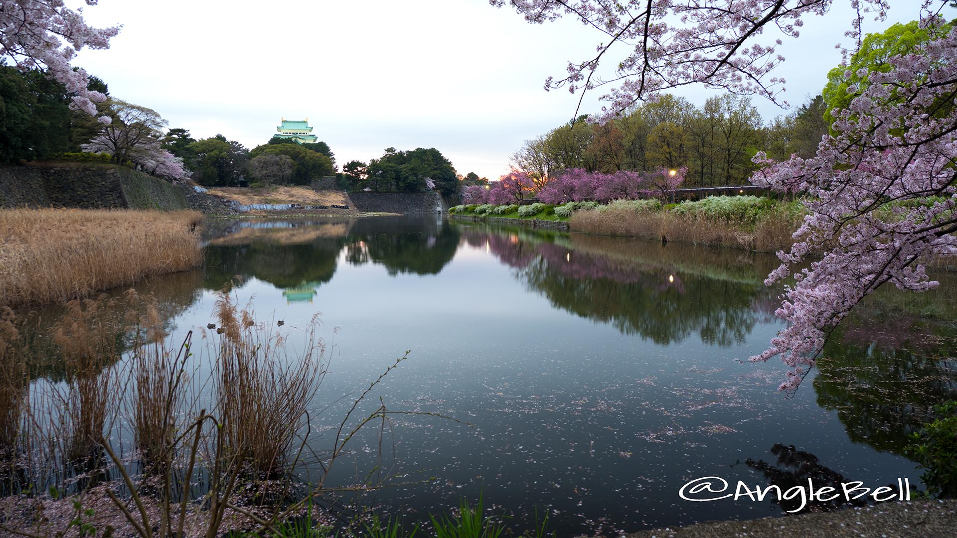名古屋城 御深井堀から見る桜と夕景