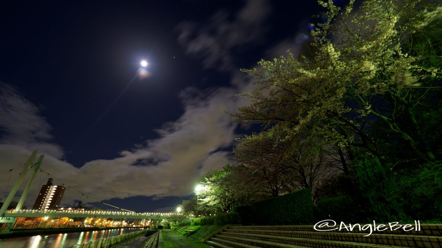月夜 熱田記念橋と遊歩道の夜桜
