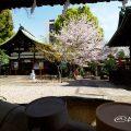 手水舎 大須 三輪神社・桜