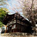 大須 三輪神社 ソメイヨシノと縁結びの木