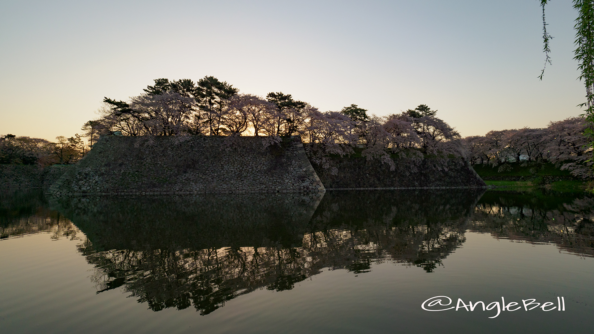早朝 名古屋城 城西 外堀の石垣 桜と水景