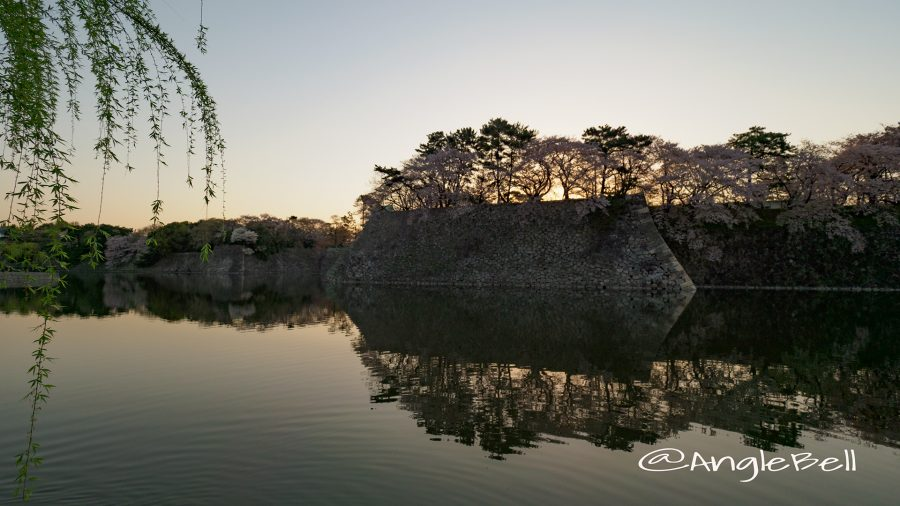 早朝 名古屋城 西之丸外堀と御深井丸の石垣 桜と水景