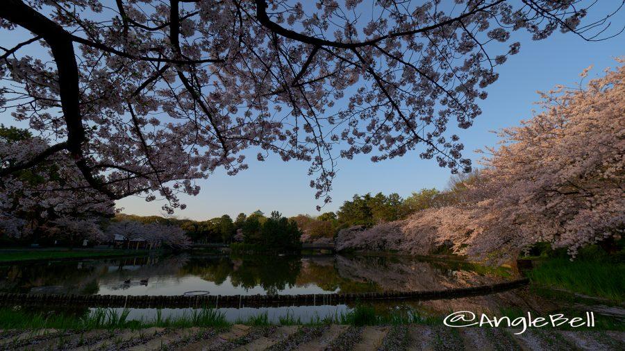 名城公園北園 おふけ池と桜の風景