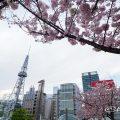 オアシス21東側から見る名古屋テレビ塔とサクラ