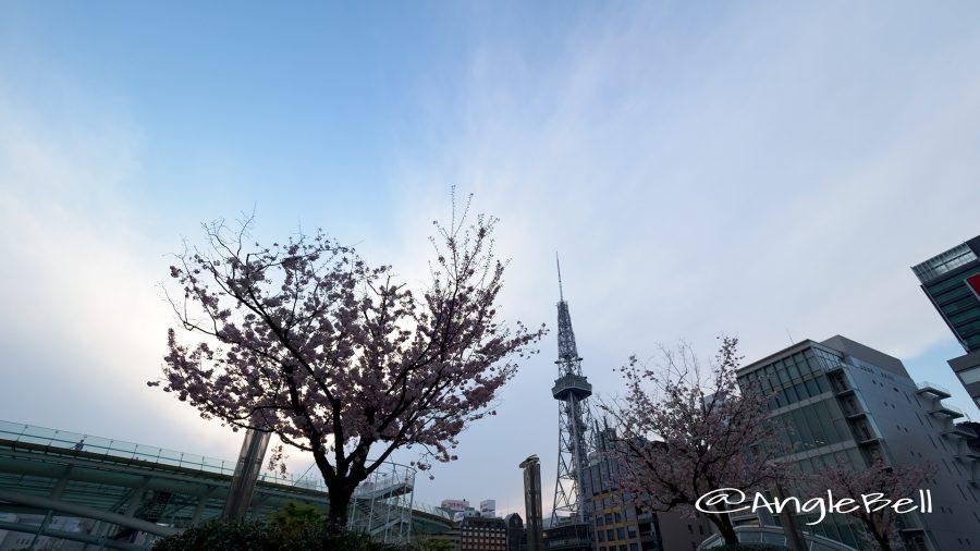 オアシス21 桜とテレビ塔