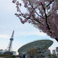 オアシス21南側から見る名古屋テレビ塔とサクラ