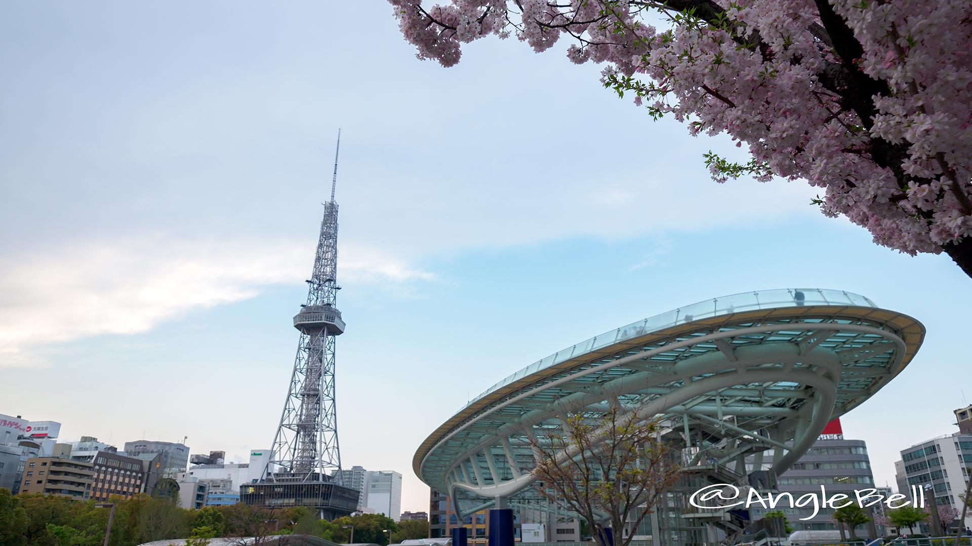 Nagoya TV Tower Oasis21 Cherry Blossoms