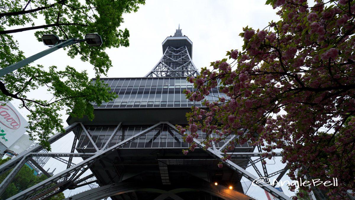 名古屋テレビ塔と八重桜 朝