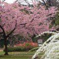 名古屋城 二之丸東庭園 花の共演