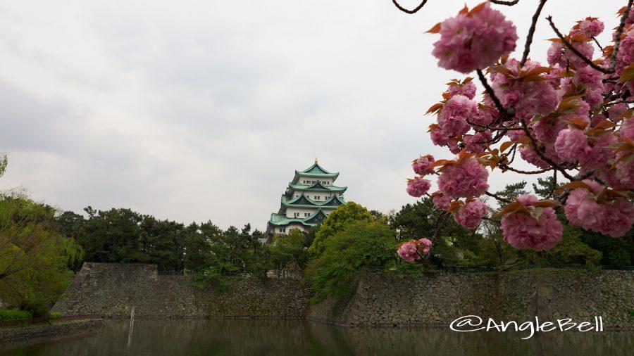 八重桜と名古屋城