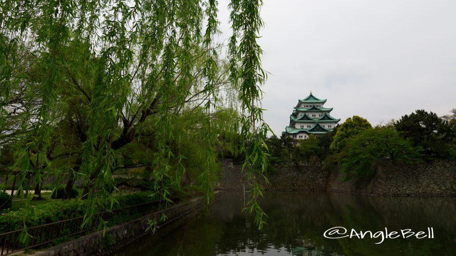 外堀 ヤナギと名古屋城