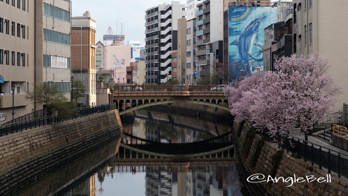 名古屋伏見 納屋橋と桜