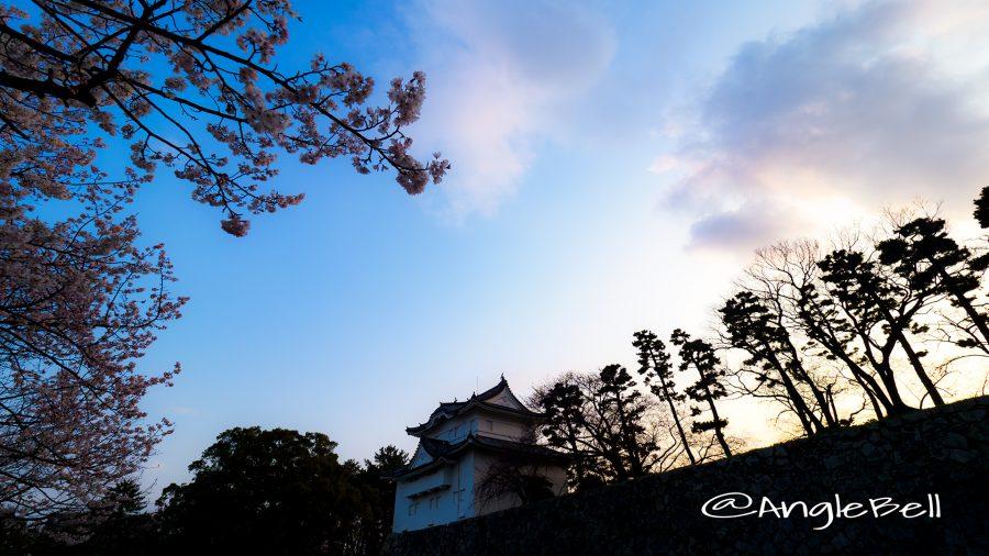 名古屋城 東南隅櫓 夕景とエドヒガン桜