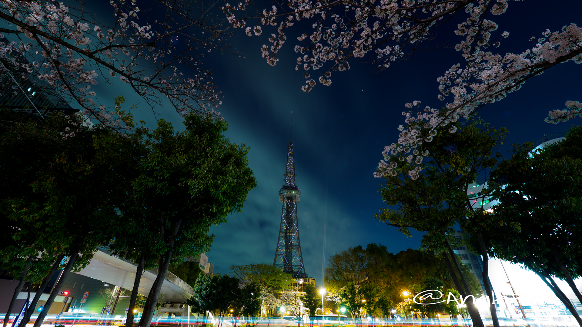 Cherry Blossoms at Night Nagoya TV Tower