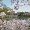 鶴舞公園 竜ヶ池と花景