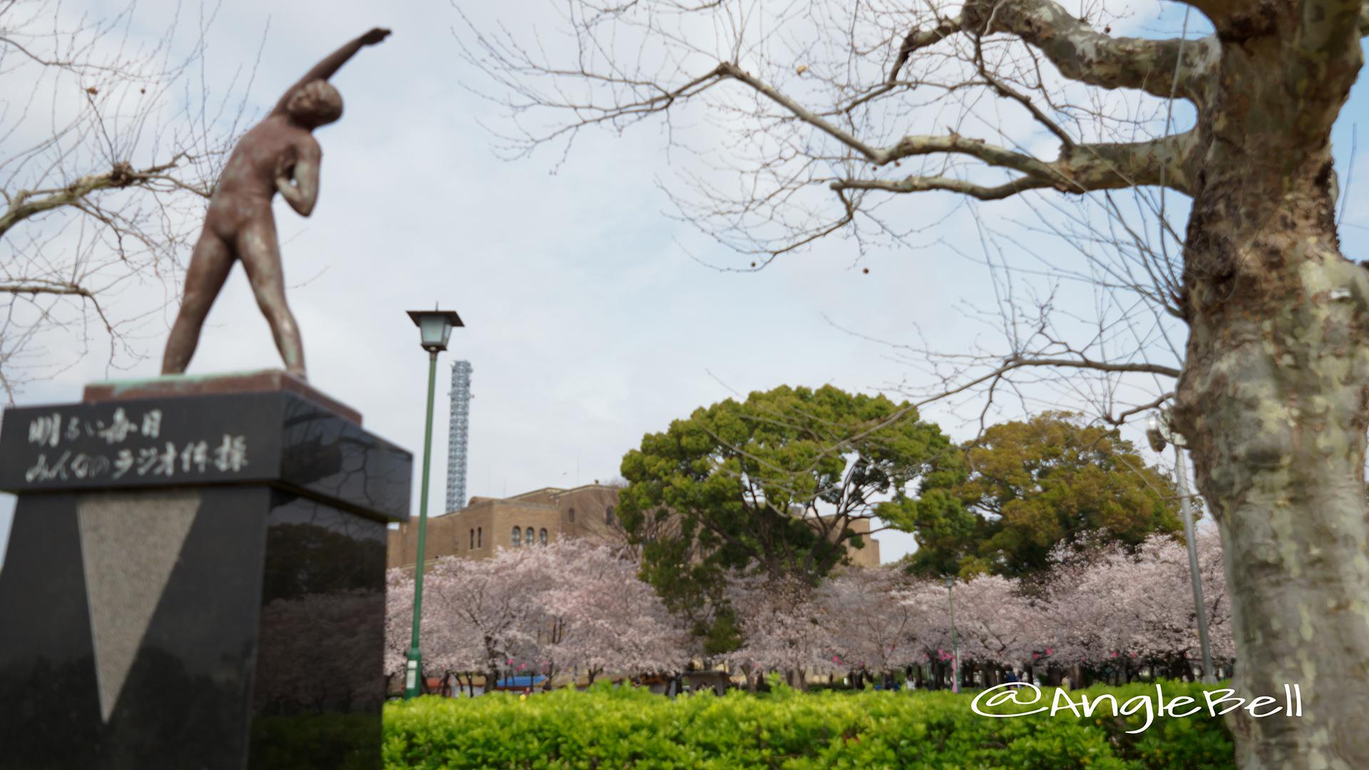 鶴舞公園 ラジオ体操の像と桜