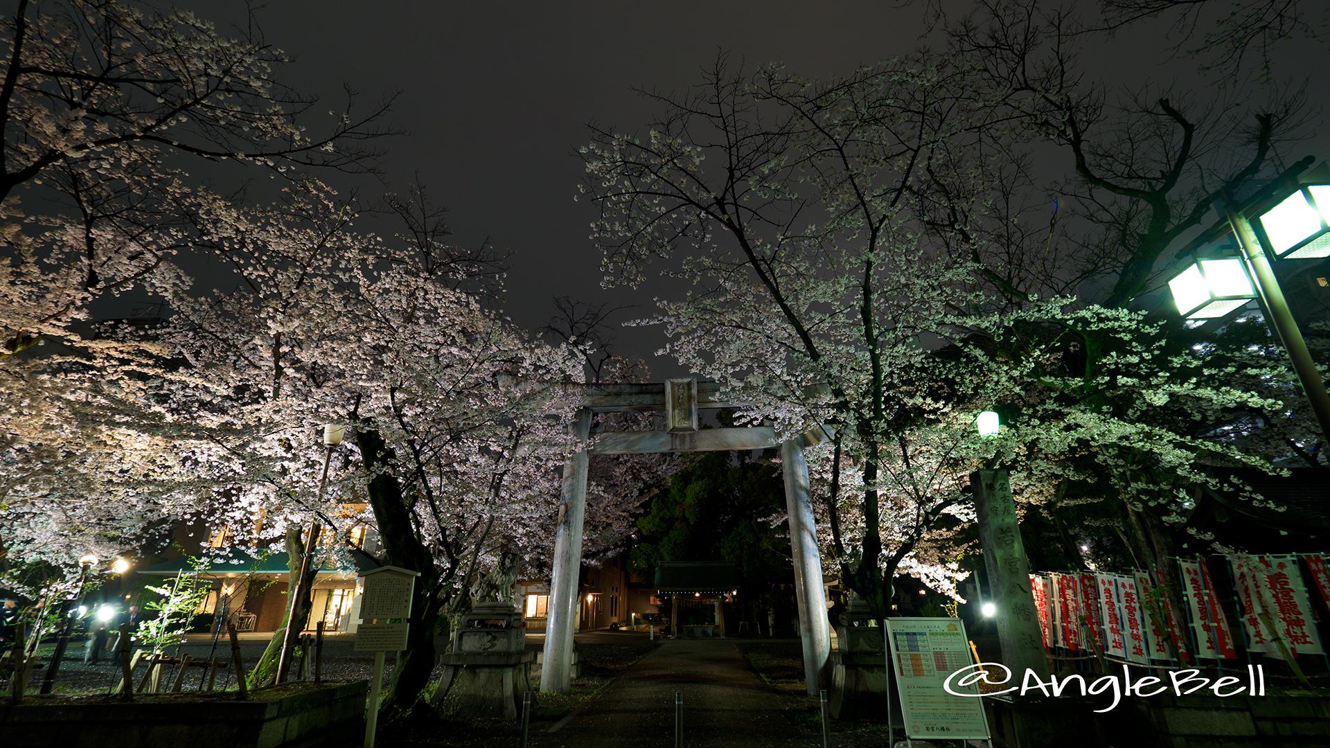 若宮八幡社 桜ライトアップ