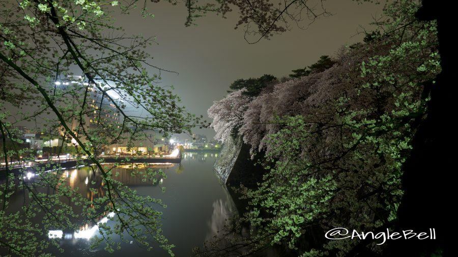 名古屋城外堀の石垣 夜桜と水景