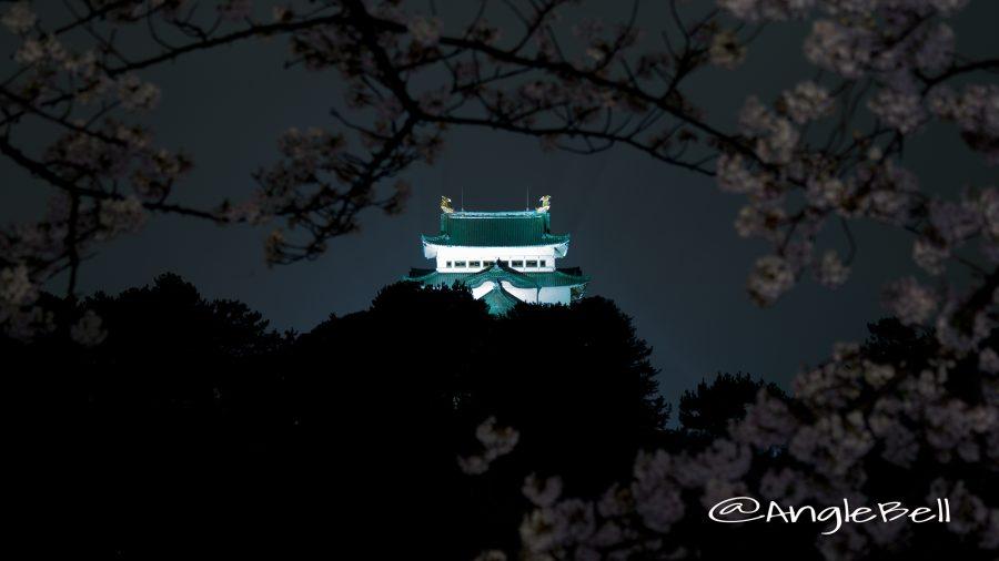 御深井堀 名古屋城ライトアップと桜