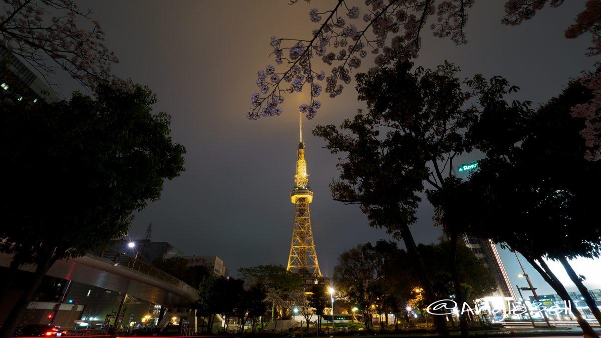 桜通 名古屋テレビ塔と桜