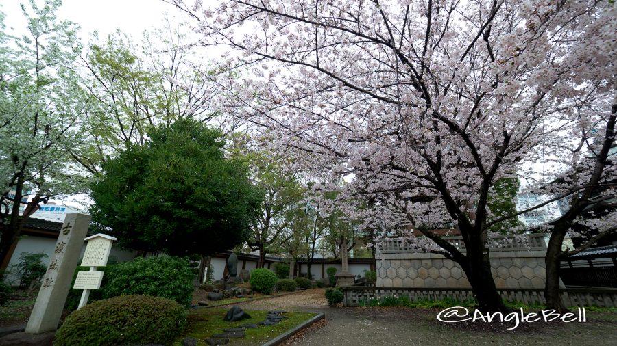 東別院 古渡城跡碑・石碑と桜