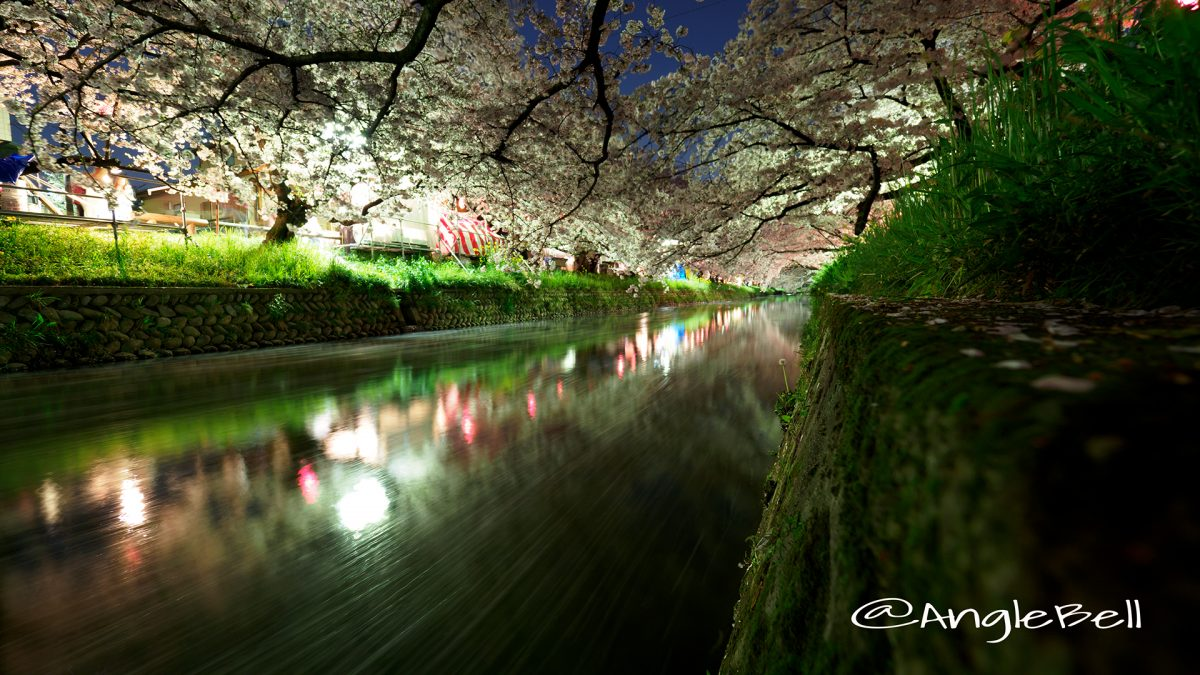 五条川 夜桜と水景 愛知県岩倉市