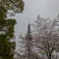 名古屋テレビ塔と街路樹 2017春