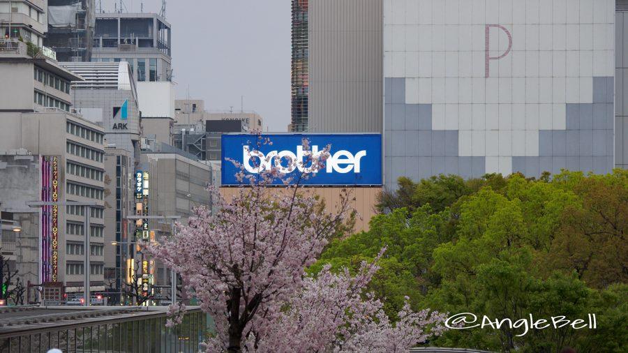 オアシス21遅咲きの桜と久屋大通公園の街路樹