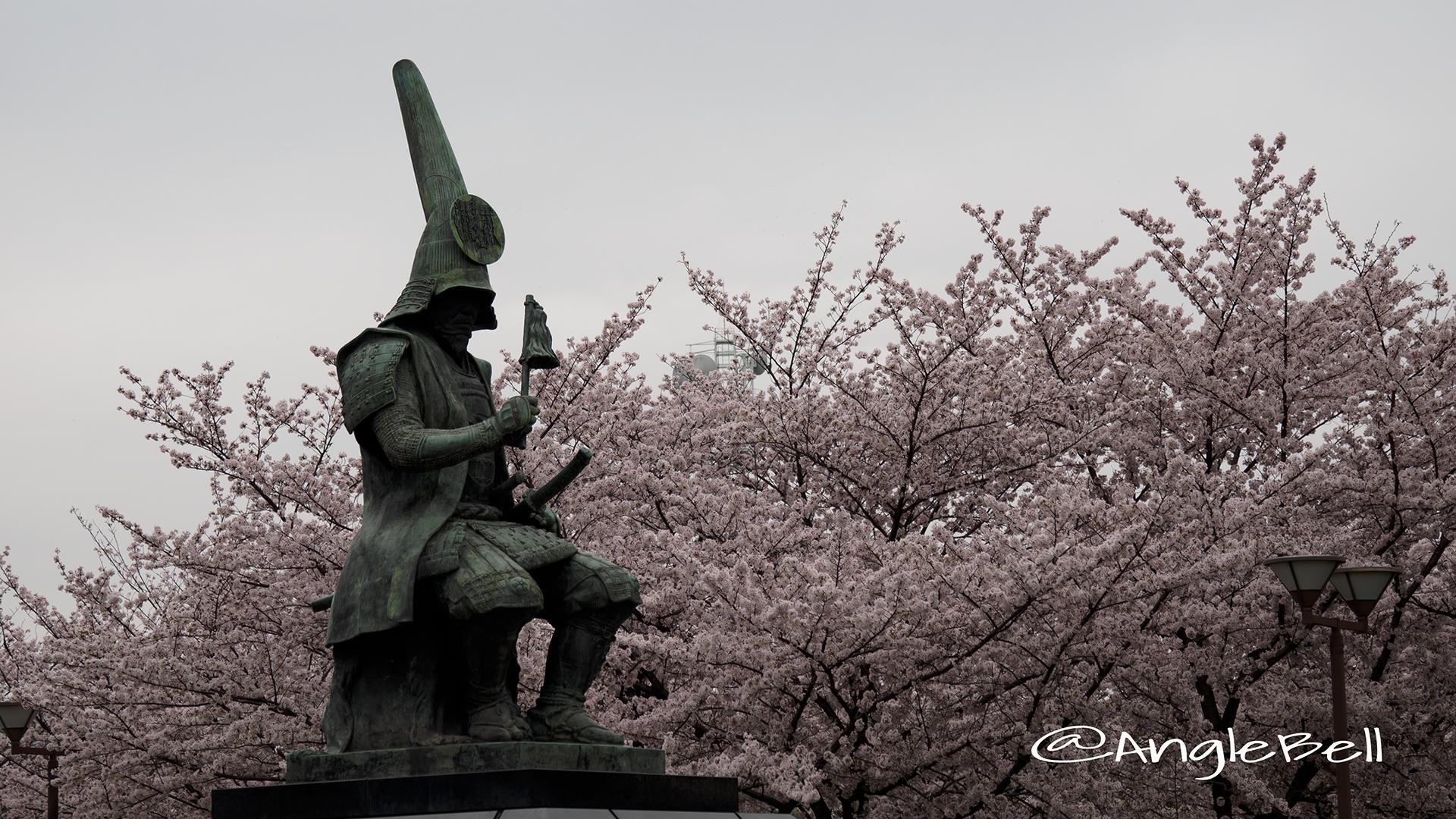 加藤清正像と桜 名城公園