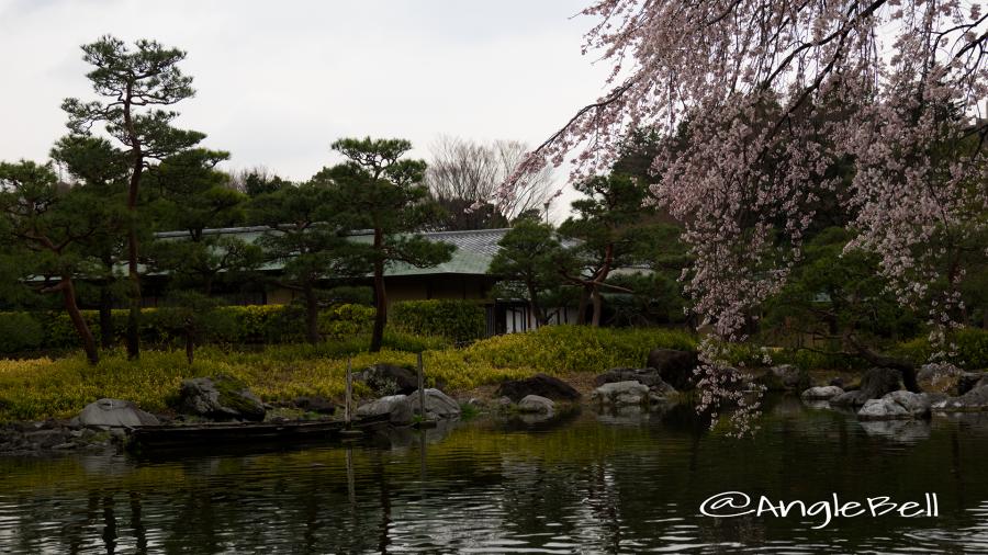 白鳥庭園 茶室 清羽亭と枝垂れ桜