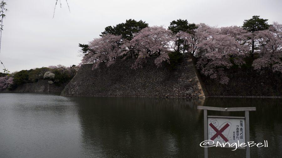 名古屋城 西之丸外堀の桜