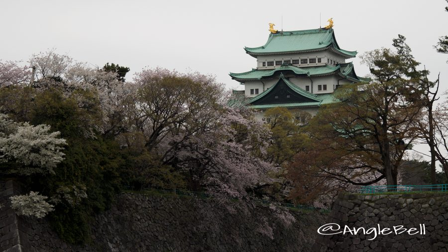 城西外堀から見る名古屋城天守閣と桜