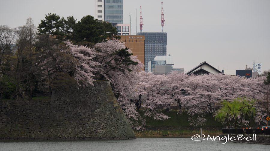 城西(西之丸)の外堀と桜