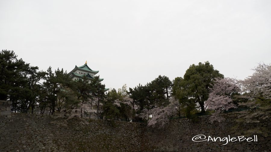 御深井丸外堀と名古屋城と桜