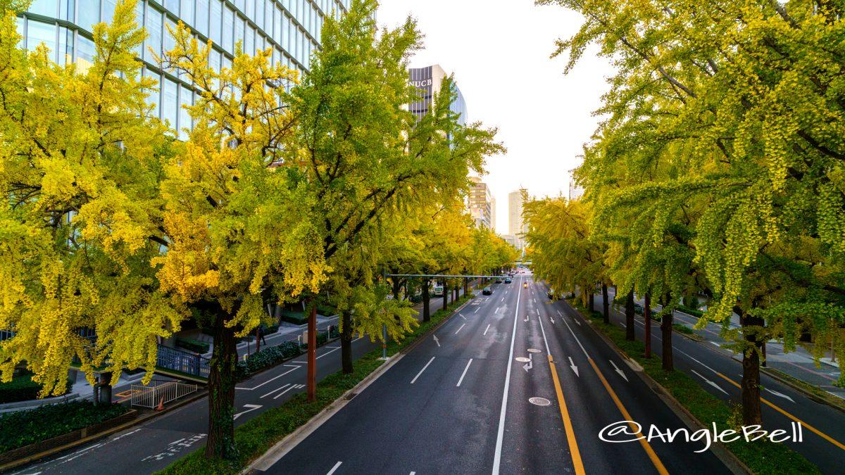 日銀前交差点 街路樹 イチョウ並木