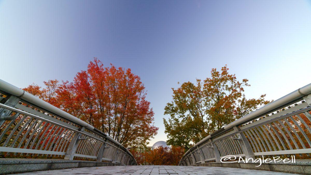 白川ブリッジから見る街路樹 2019秋