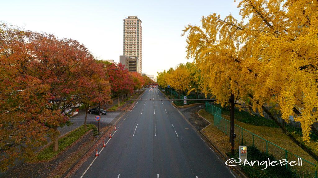白川ブリッジから見る若宮大通 街路樹