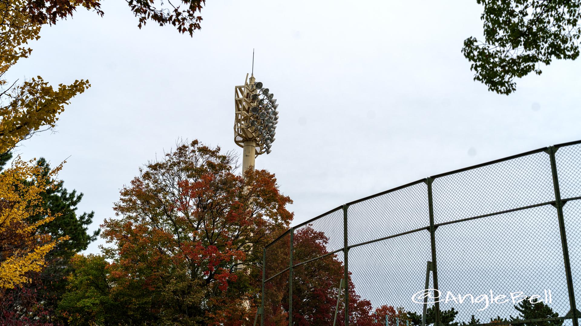 紅葉 鶴舞公園 野球場 ナイター照明塔