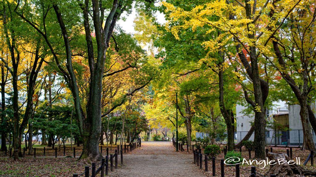 鶴舞公園 八幡山古墳側の公園樹木