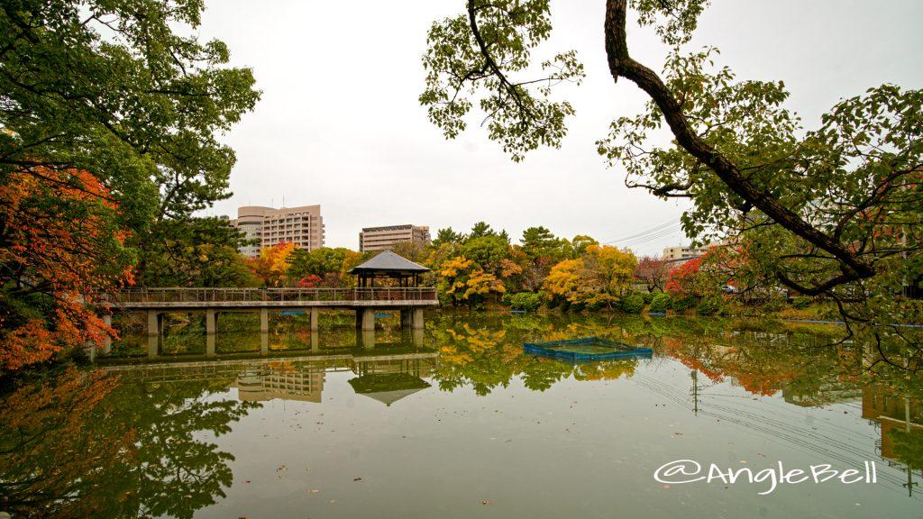秋の風景 鶴舞公園 竜ヶ池 2019年