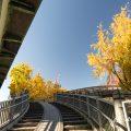 白川前駐車場から見る白川ブリッジ 2019秋