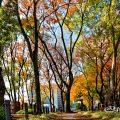 白川公園 木のまちかど側 雑木林