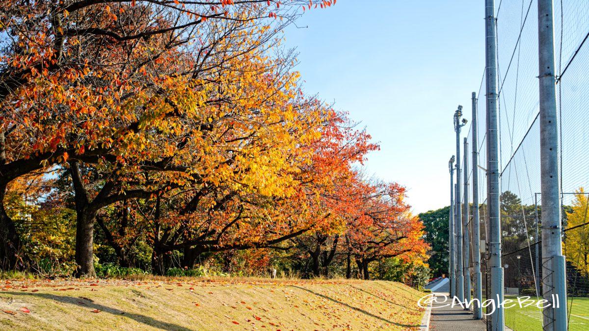 鶴舞公園 テラスポ鶴舞 桜の紅葉2019
