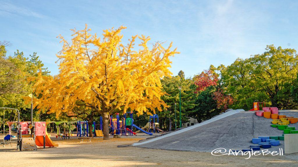 鶴舞公園 子供の広場 イチョウと石の山 2019