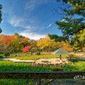 紅葉 鶴舞公園 菖蒲池 全景 2019年秋