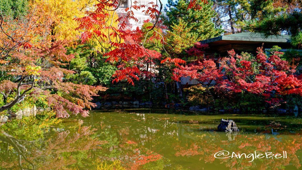 秋の池の紅葉 鶴舞公園 (2019年12月)