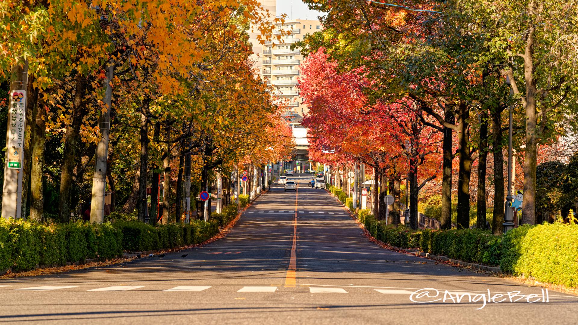 名工大前から見る紅葉 昭和区鶴舞町 街路樹