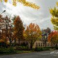 若宮大通 花の広場から見る久屋大通庭園 フラリエ周辺 黄葉
