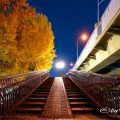本町通沿い 若宮ブリッジ (歩道橋) 黄葉 2019年